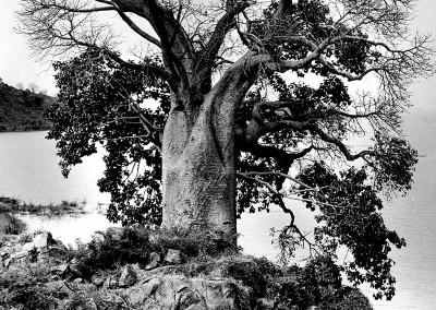 arbre-expo-022-web